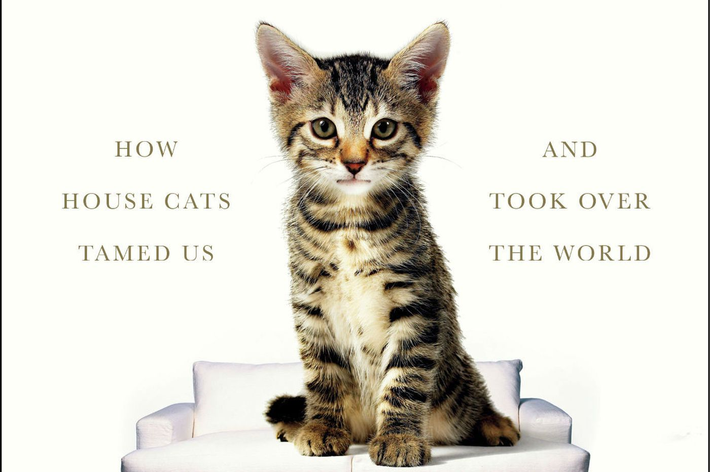 'The Lion in the Living Room': Why cats R Us
