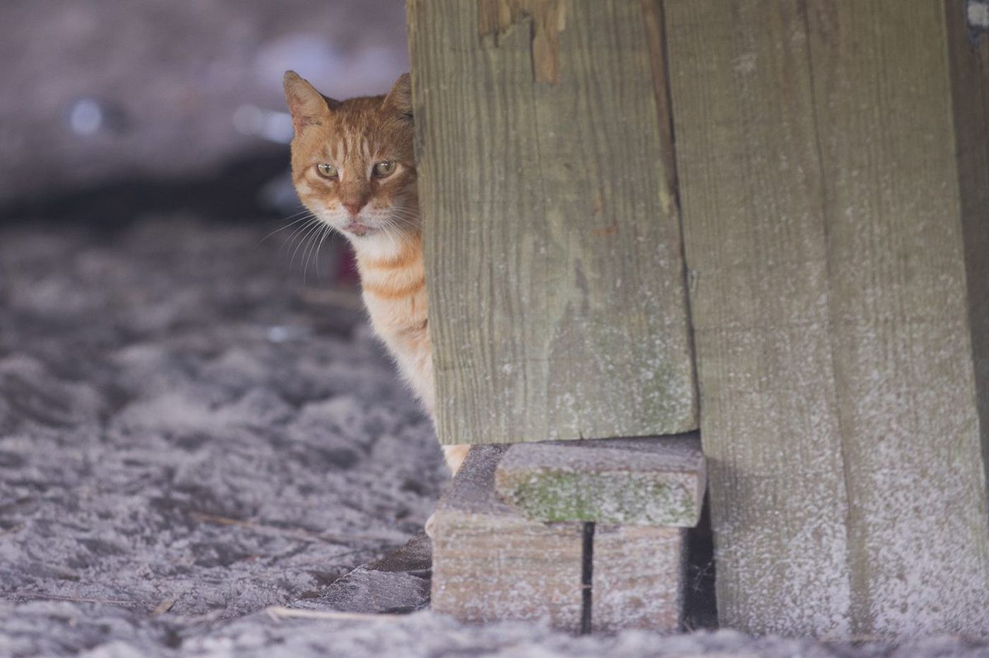 Atlantic City and feral cats - purrfect together