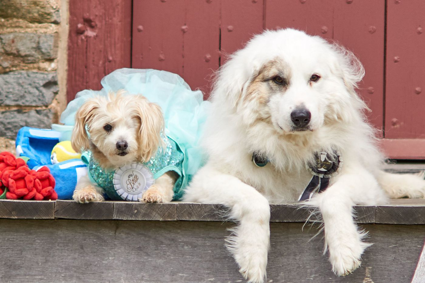 You can go to a dog wedding this weekend in Media. Here's how to plan your own.
