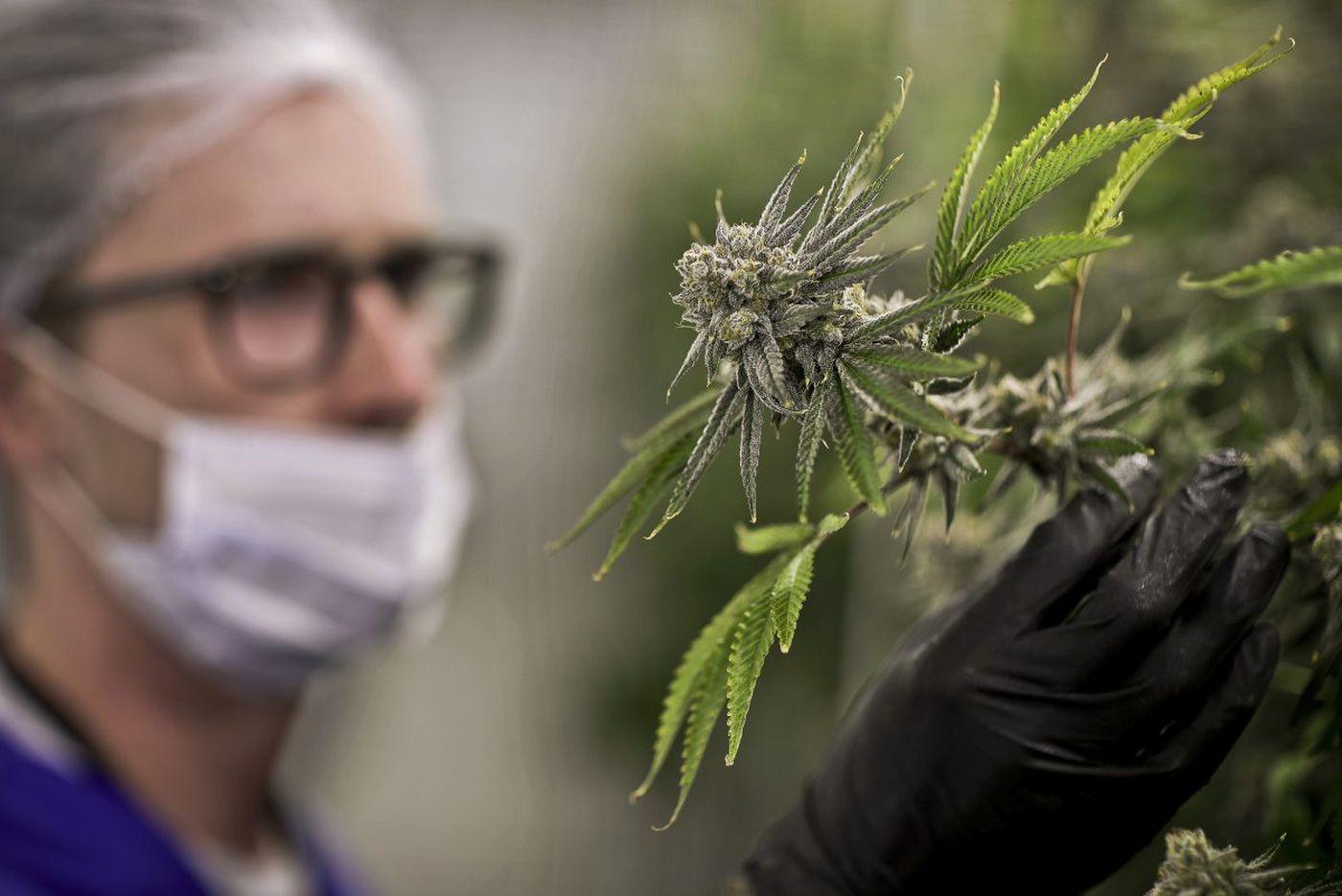List of medical marijuana docs in Philly region; Updated Feb. 26, 2018