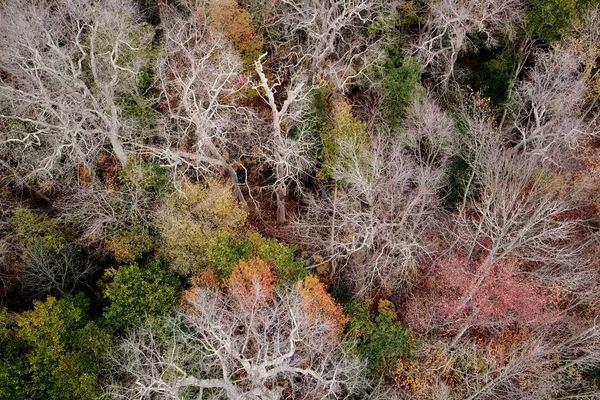 Rising sea levels could kill off 500-year-old trees in ancient New Jersey forest
