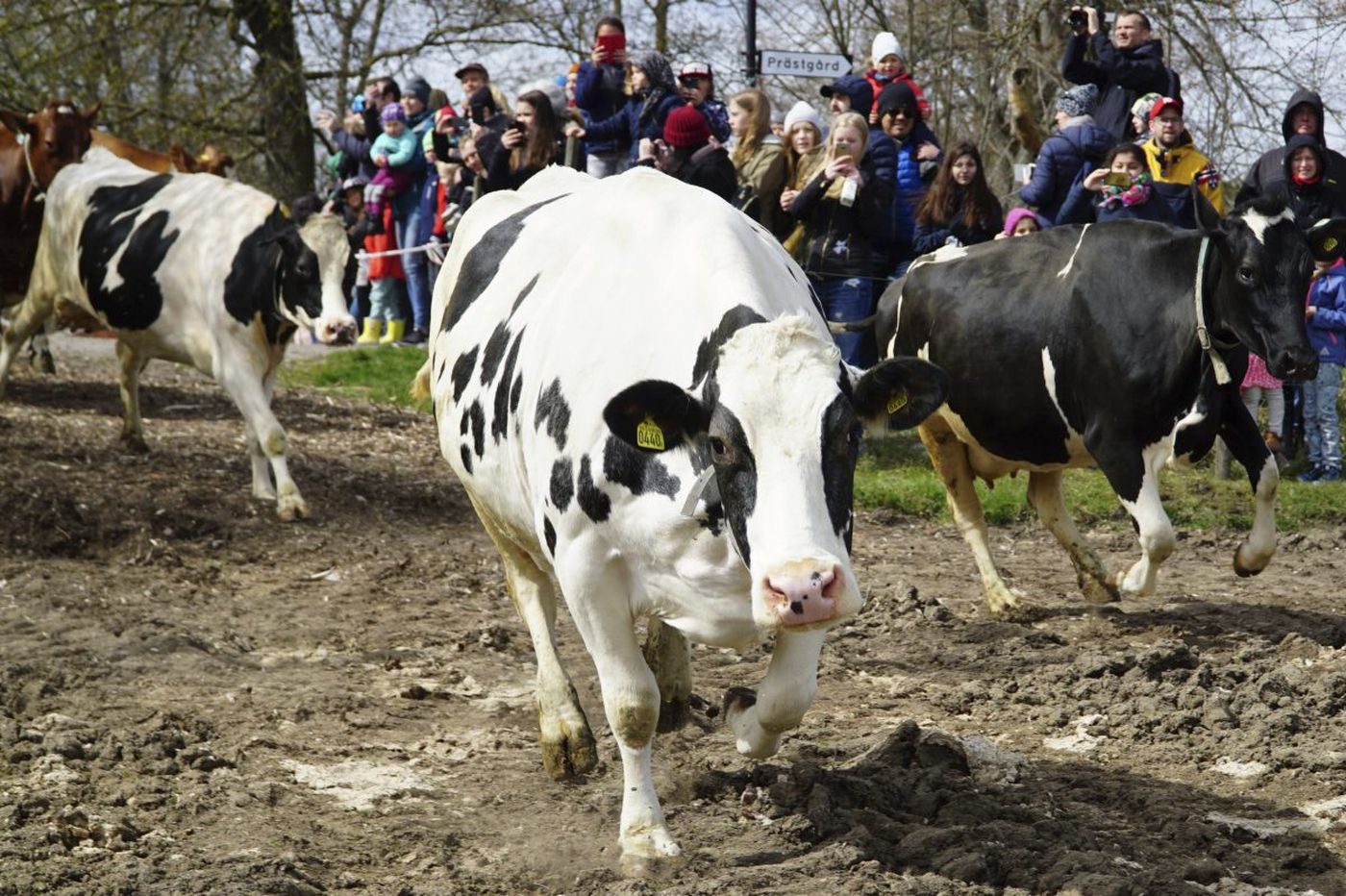 Why are we so comically clueless about dairy?