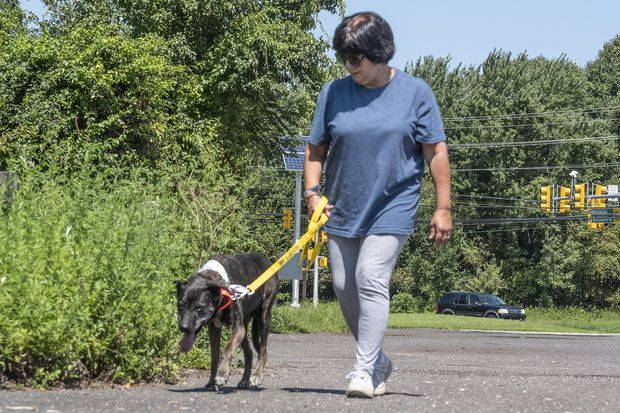 Need a pal? No problem. Just Rent-A-Dog from the Camden County Animal Shelter.
