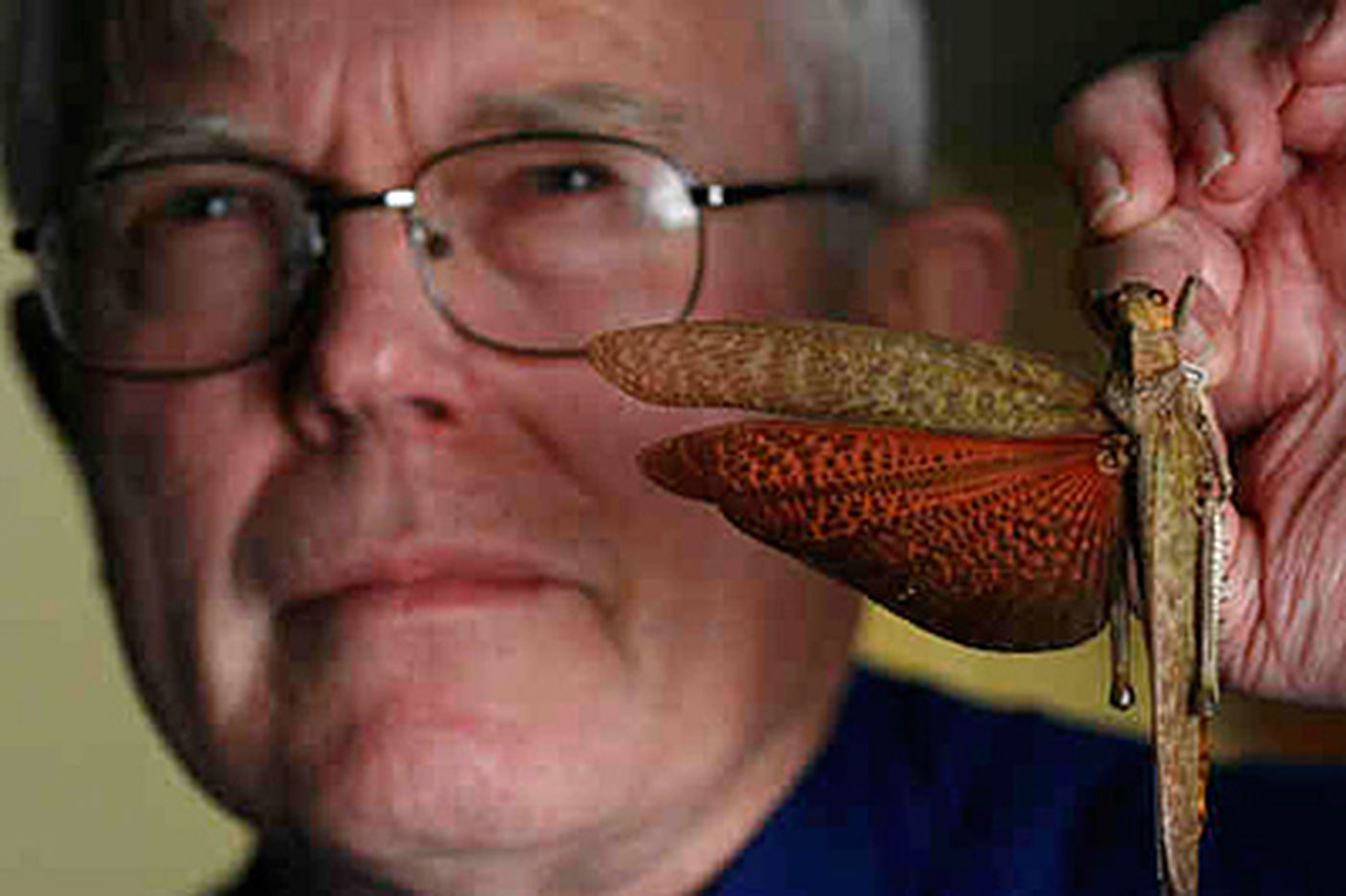 Phila. academy honors a big man in the insect world
