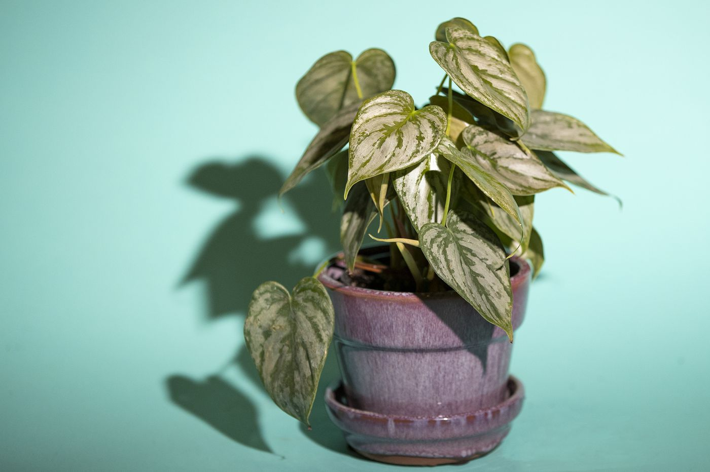 The best low-light plants for your Philly office or desk