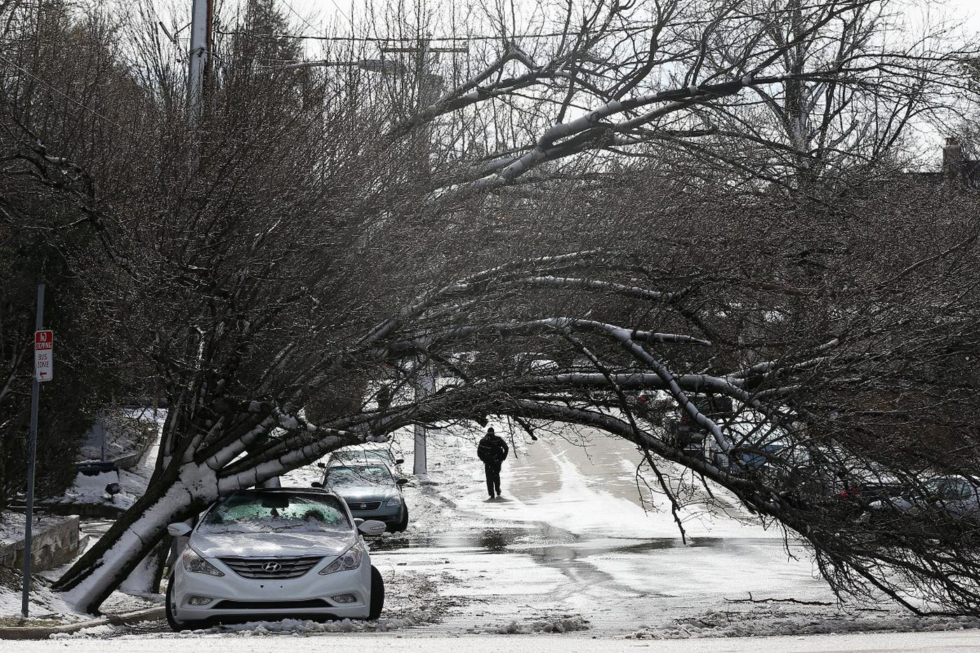 Nor'easter tore through the Pa. suburbs, downing trees, causing havoc as many residents remain without power