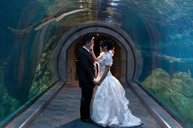 Phuong and Linh in the shark tunnel at the Adventure Aquarium. (Tom Smith Photography)