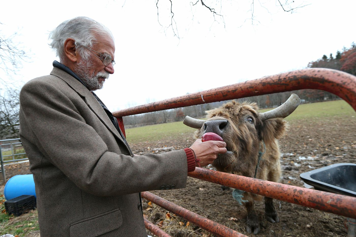 Can being nice to cows save the world? A Hindu man in the Poconos would like to believe so.