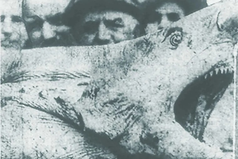 The head of the man-eating monster, showing its massive jaws and teeth. Some idea of the size of the shark's head can be formed by a comparison of the heads of the men who are standing nearby.