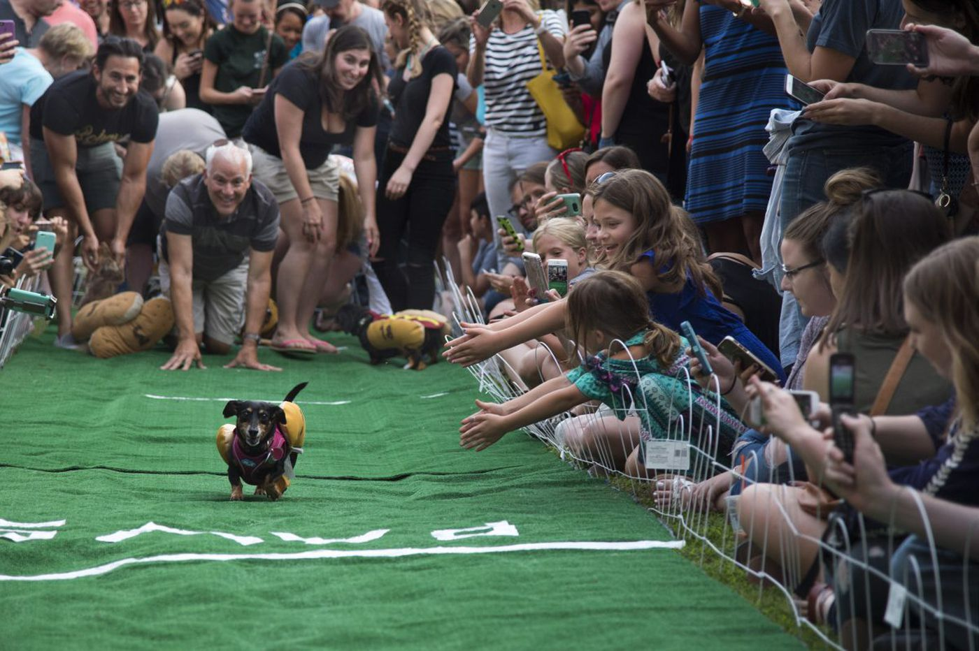Philly wiener dogs race in Manayunk