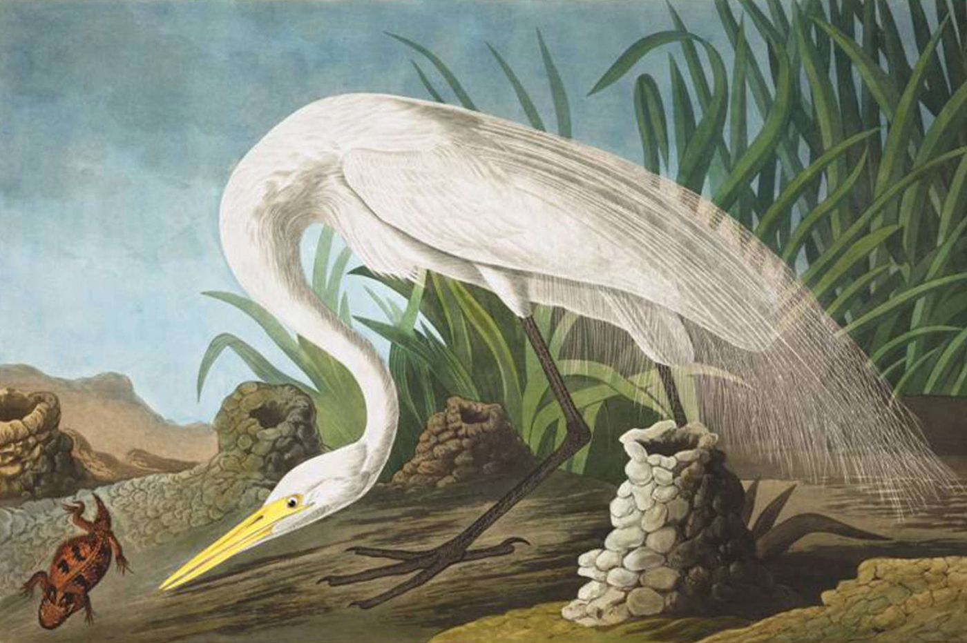 Gallery shows: Audubon and contemporary art; photography books