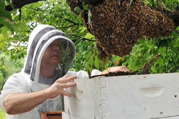 Investing in You: Why buy the farm, when you can rent the bees, or chickens, or goats?