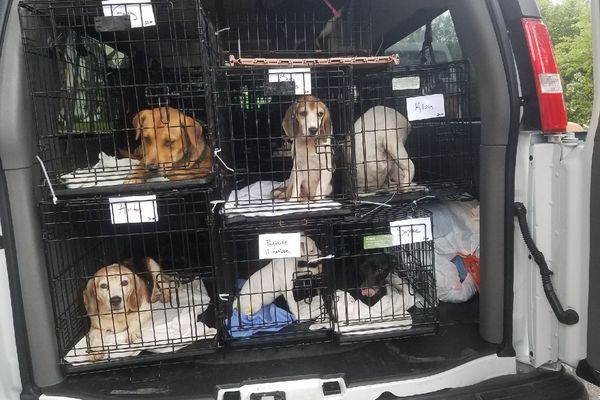 How a Philly-area shelter is saving dogs from Hurricane Florence