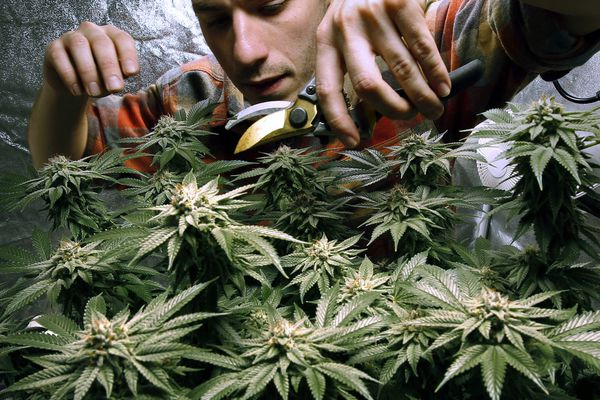 What's fresh in the latest Pa. bill to legalize cannabis for recreational use?