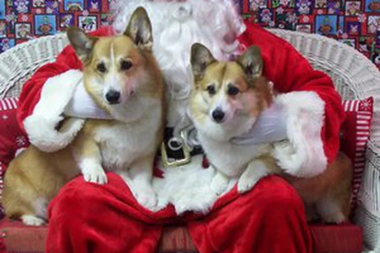 Get a photo of your pet with Santa at in Folsom today.