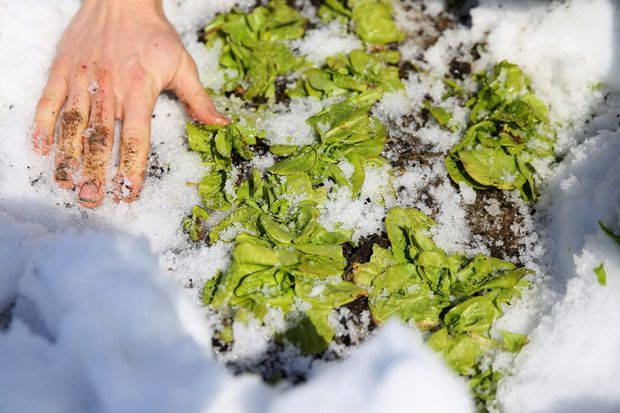 For chefs, spring means greens are on the menu
