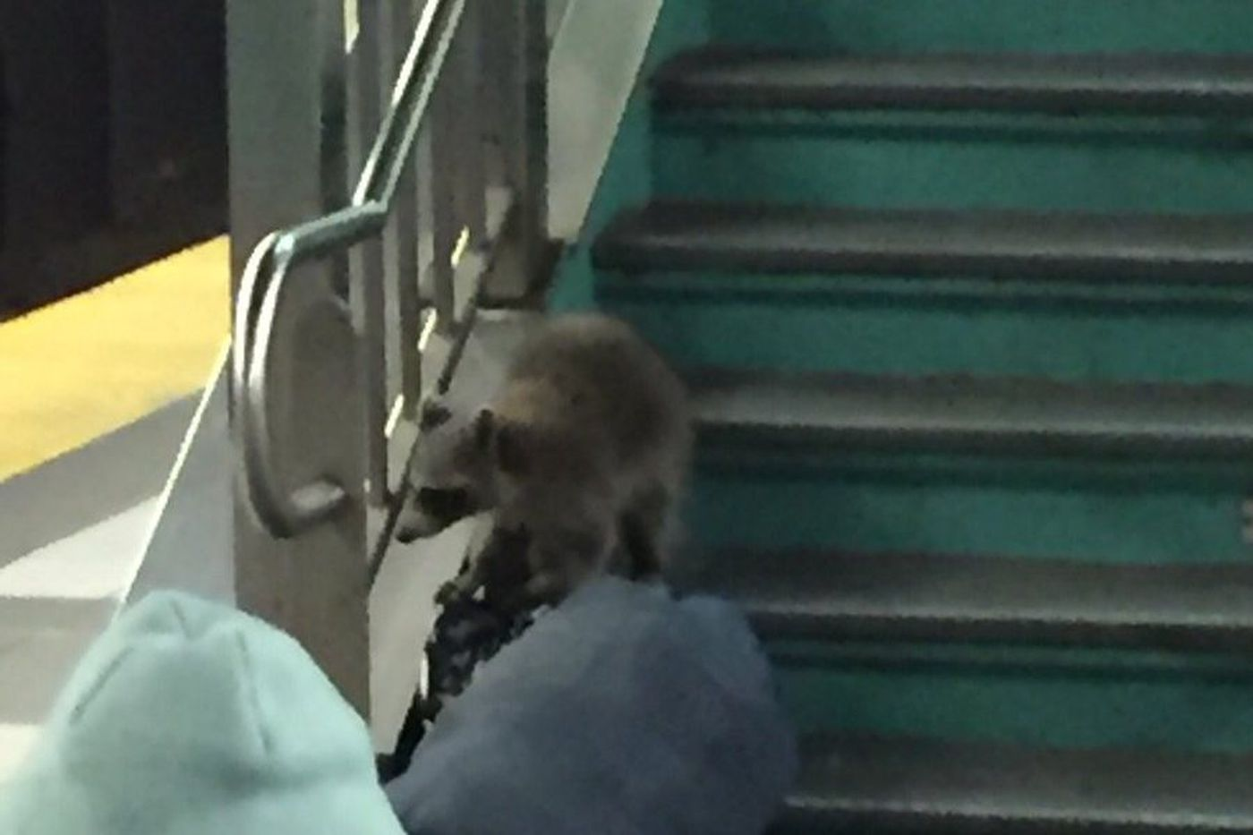 Update: Center City furry fare evader caught, released in New Jersey