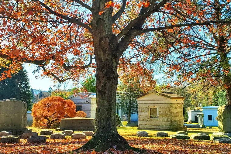 Laurel Hill Cemetery is home to some of the most striking fall foliage in the Philadelphia area.
