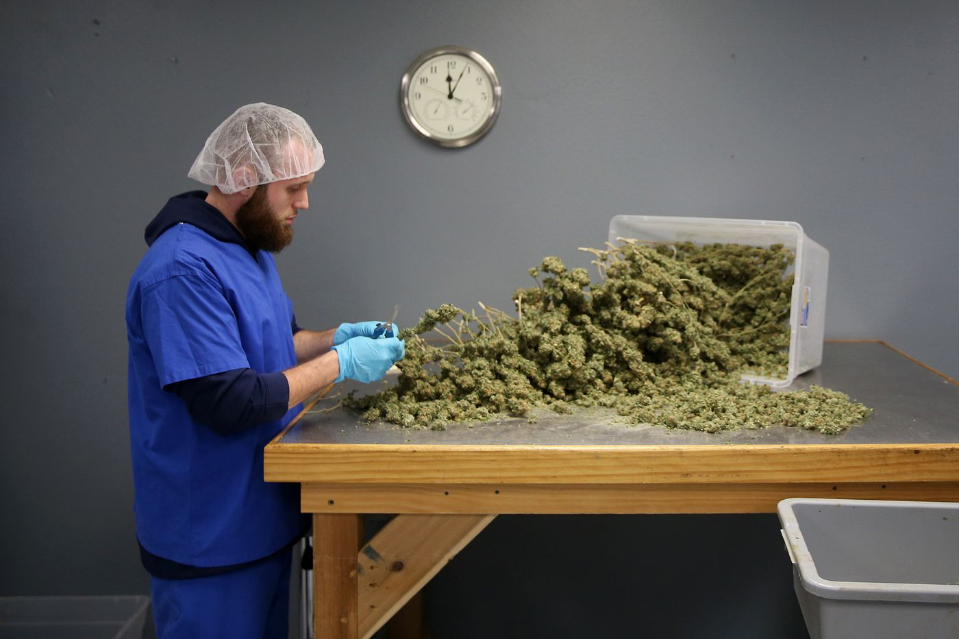 Public faith in marijuana outpaces medical research, study finds