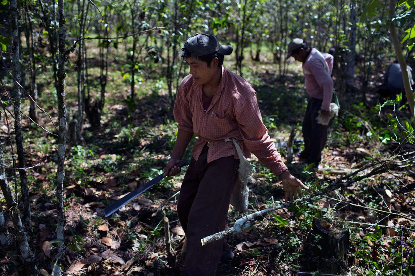 Climate Change Could Spell Disaster For Coffee But Science