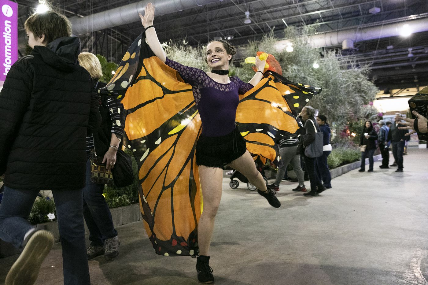 Flower show reminds us to help out butterflies