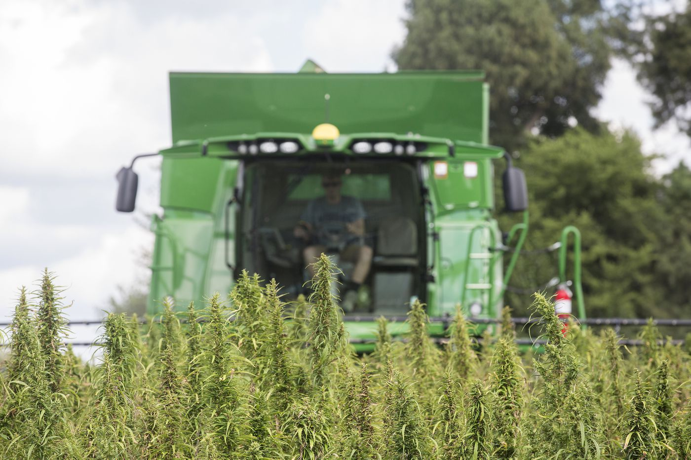 In a surprise move, Pennsylvania is throwing the door wide open for industrial hemp production