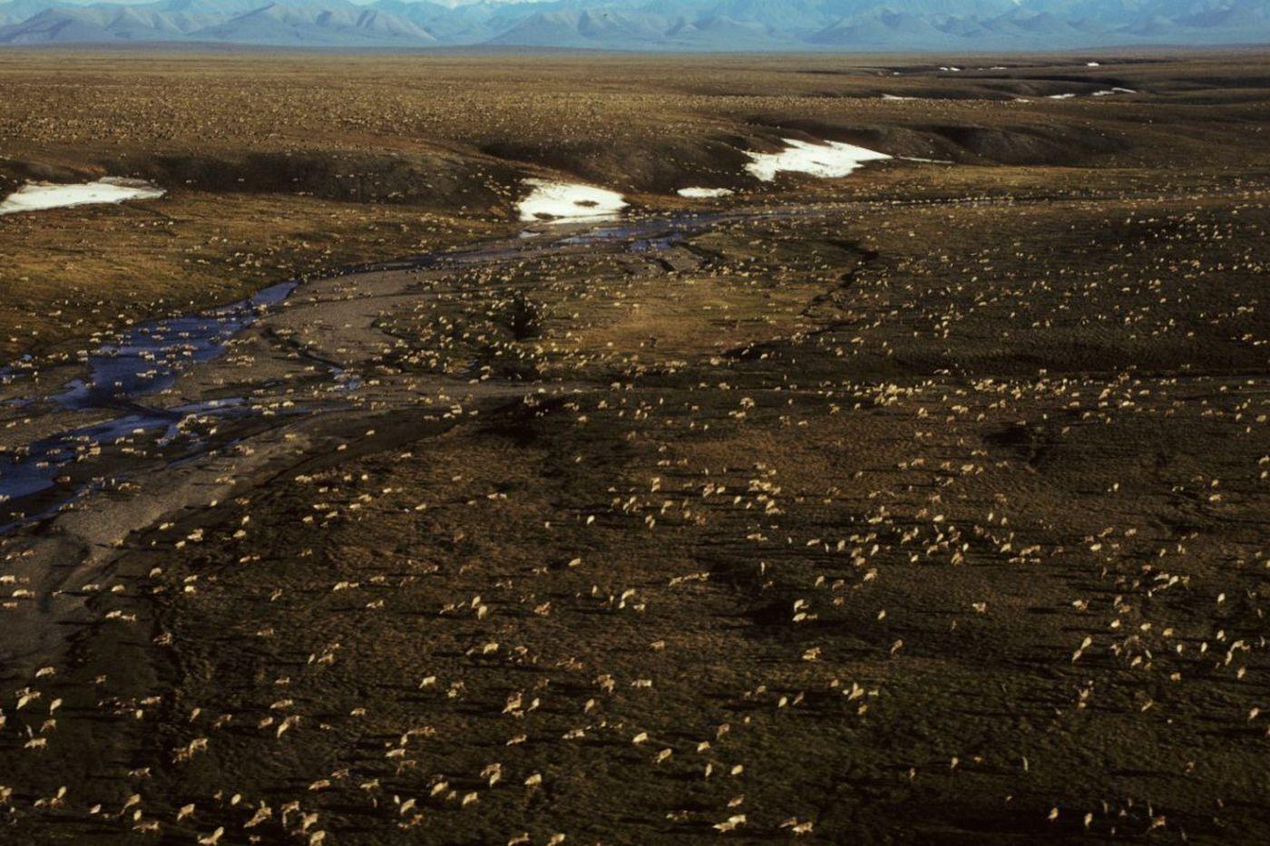Trump administration works toward renewed drilling in Arctic National Wildlife Refuge