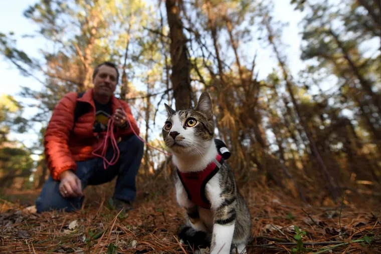 Steve Swartz walks his cat Buddy on a leash as he trains him to hike in the woods at the Apollo Park in Brogue, PA. Tuesday, Feb. 27, 2018.