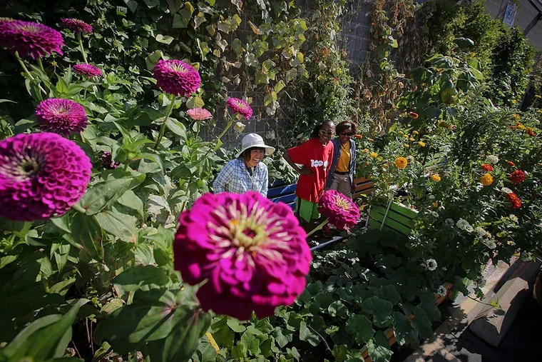 Meei Ling Ng (left), an artist and urban gardener, in the small farm she started in a city lot with volunteers Joyce Randell (center) and Valerie Marshall. The farm aims to provide food and work for the homeless. ALEJANDRO A. ALVAREZ / Staff Photographer