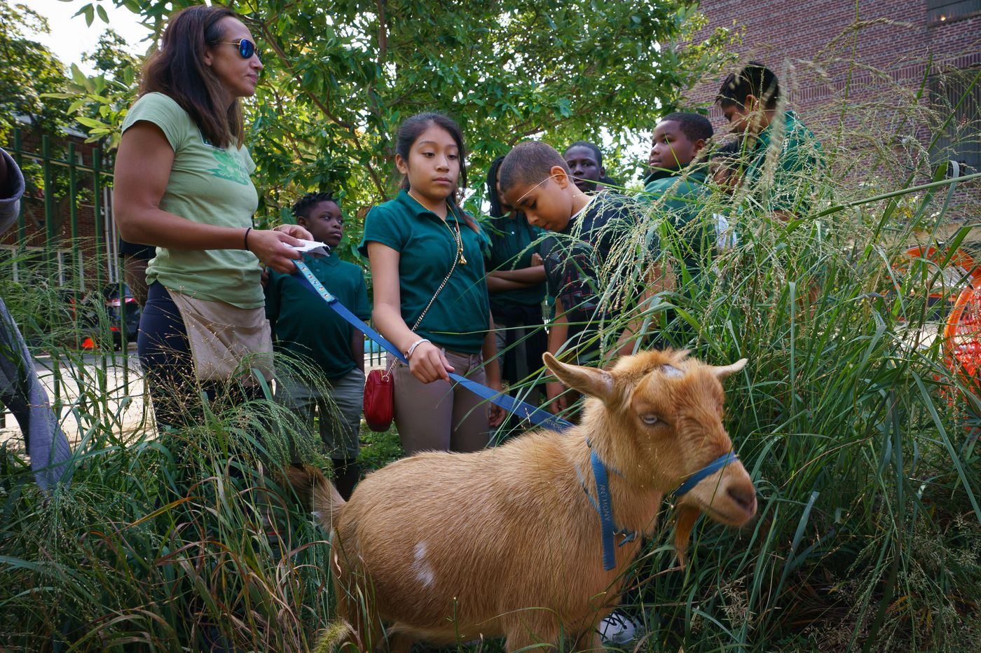 Kids, meet goats: Students receive unusual visitors at South Philly elementary