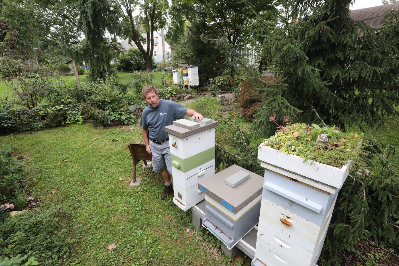 Hatfield delays decision on backyard bees