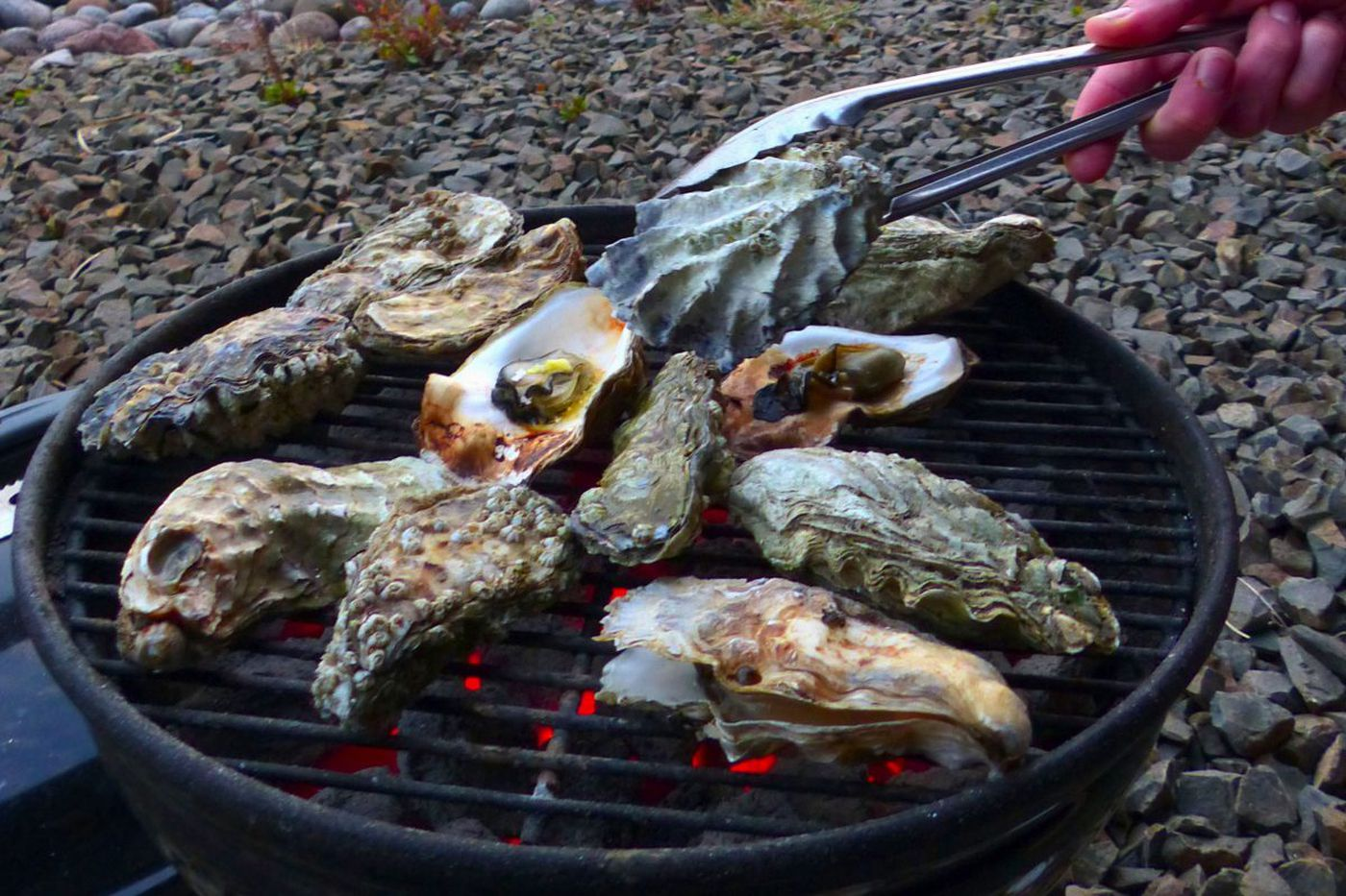 Aw, shucks: Oysterville offers a chance to come out of your shell