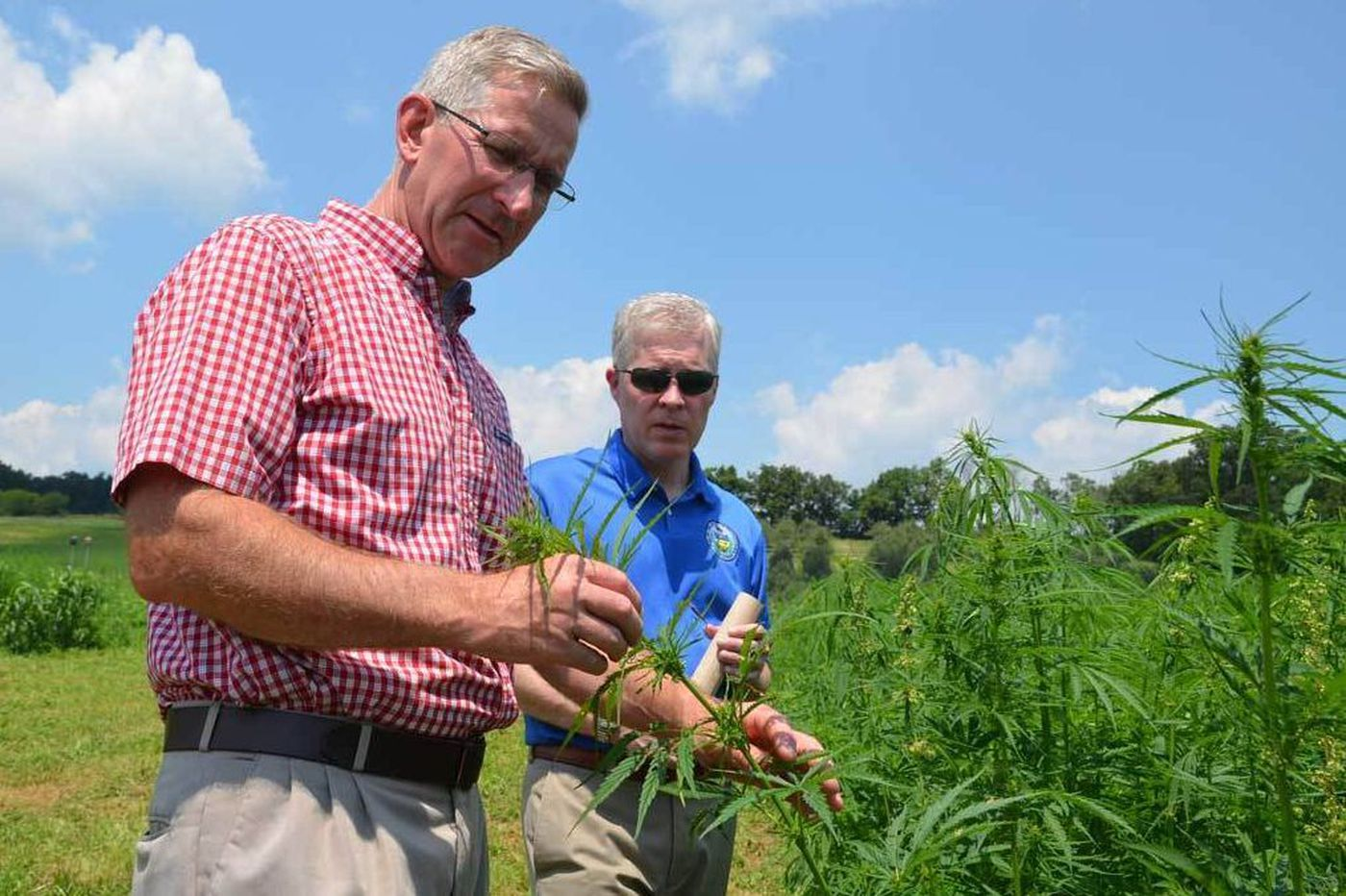 Hemp farming to expand exponentially in Pa.