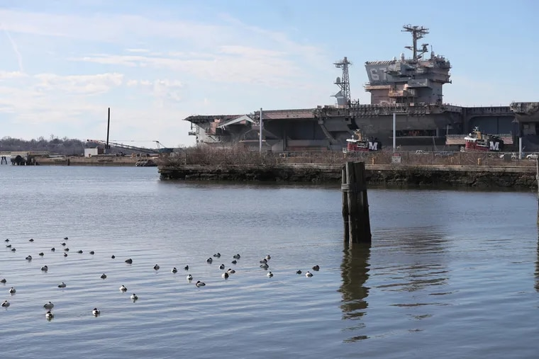 Canvasbacks sleeping in the Delaware at the naval Shipyard in December.