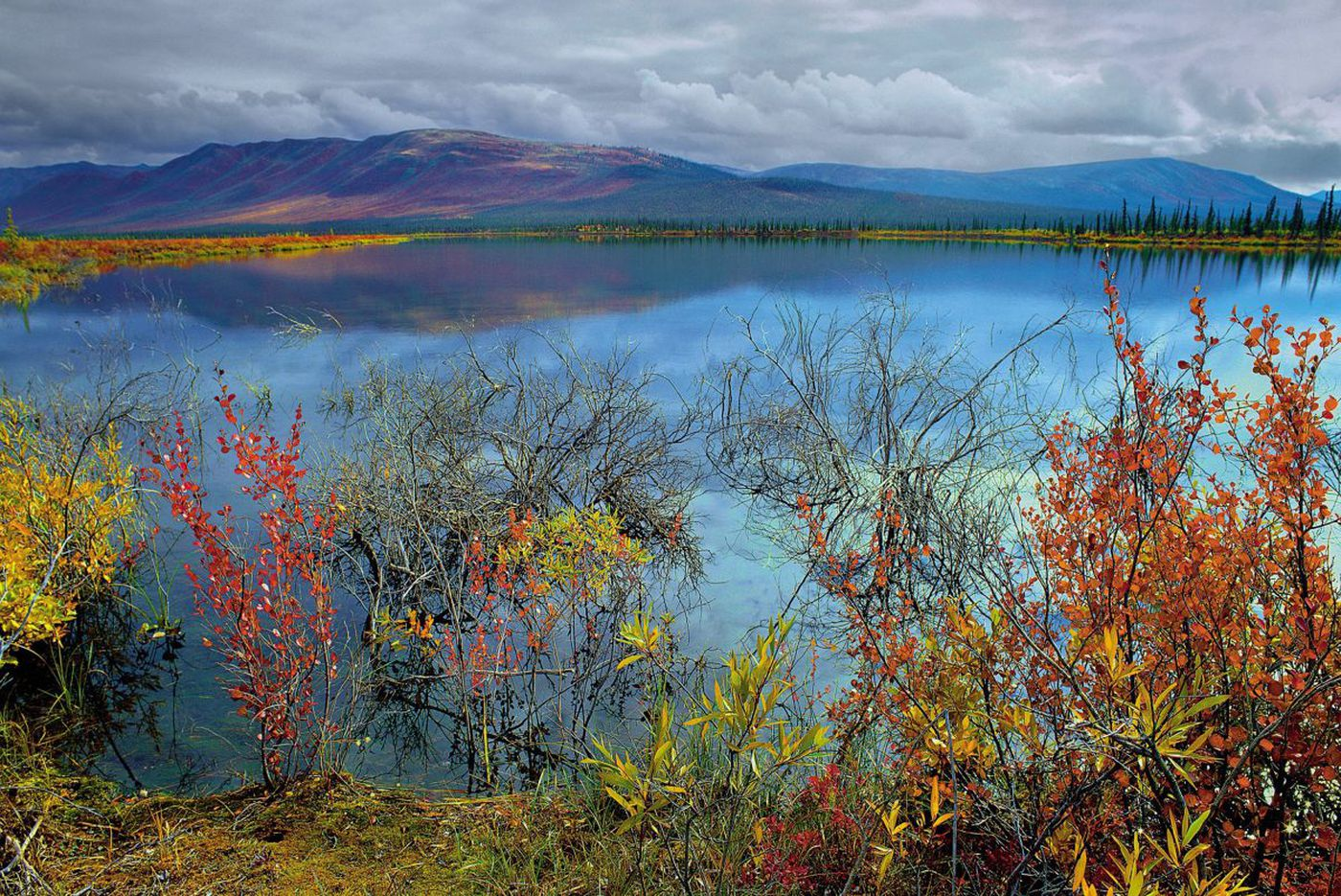 Arctic Refuge drilling: immoral, financially dishonest, and deeply unpopular | Opinion