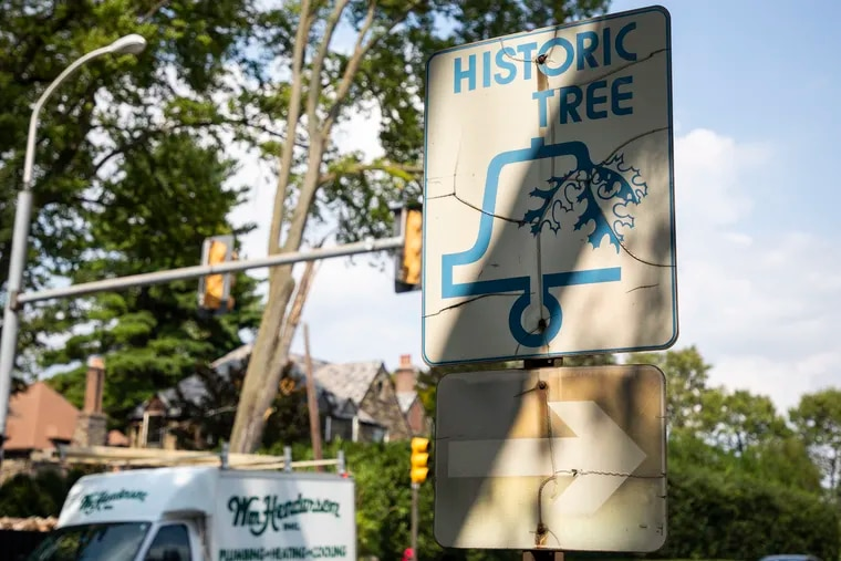 """A sign reads """"Historic Tree"""" at City Avenue and 71st Street."""