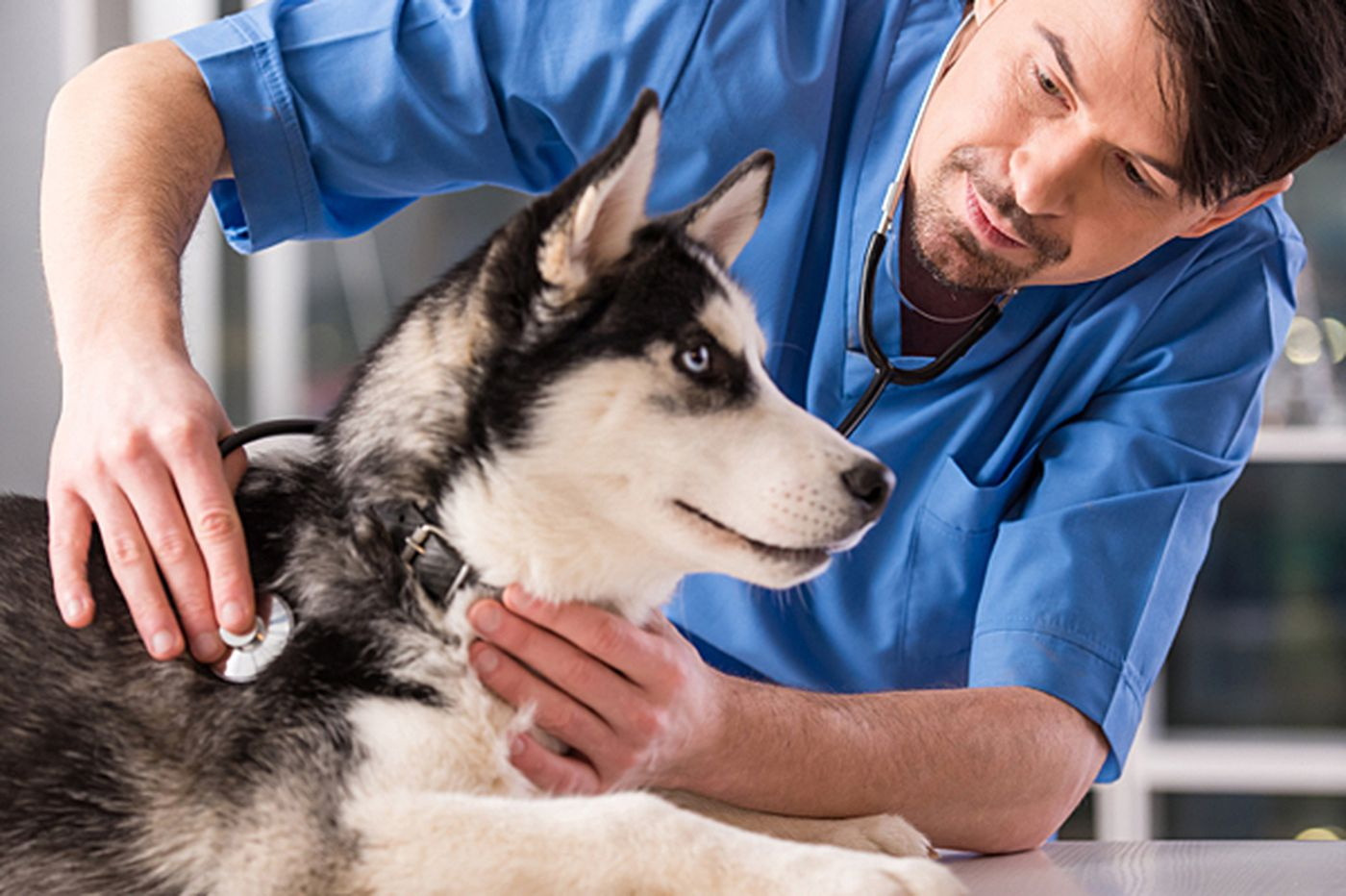 Knowing the signs of a rare canine cancer