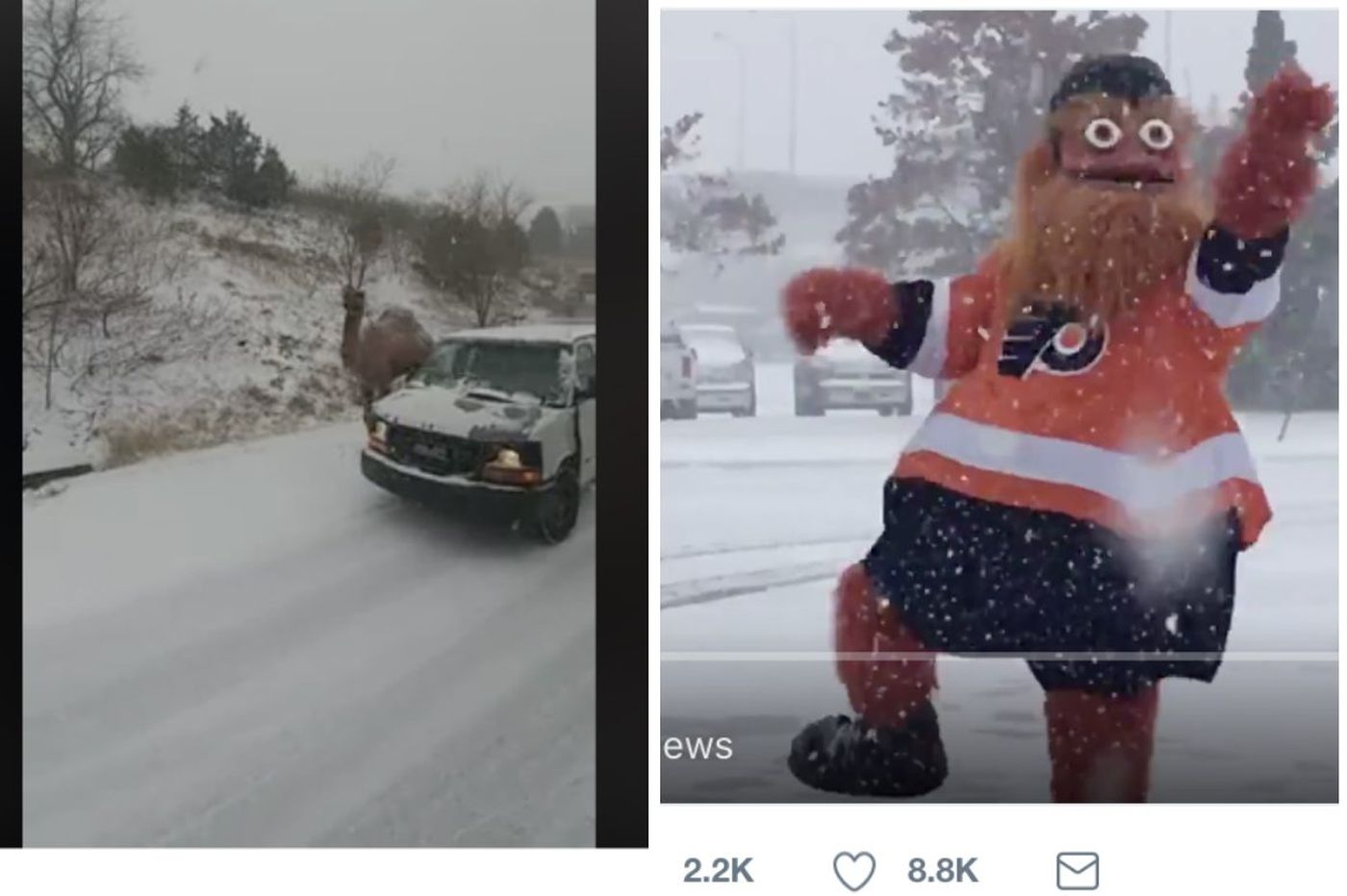 Philly's first snow: Camel roams highway, winter widens Gritty's eyes