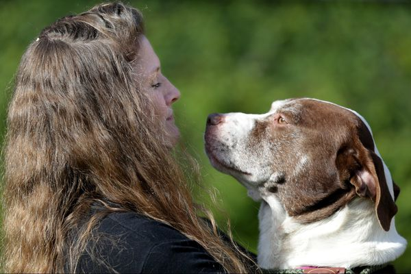 ACCT resumes dog adoptions, while Philly vet donates canine DNA kits for event