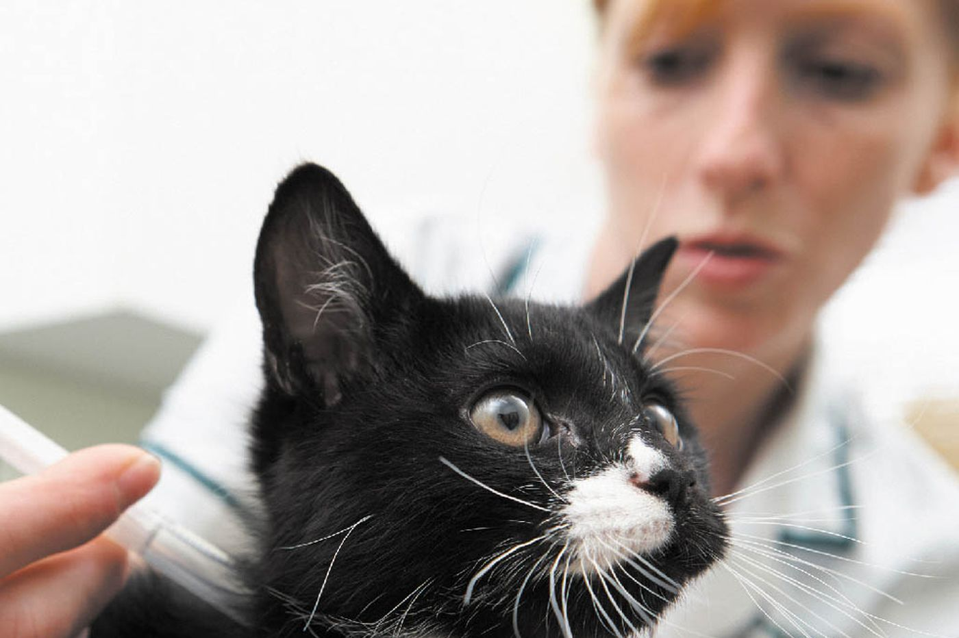 Feline diabetes: How to recognize and manage this common disease in cats