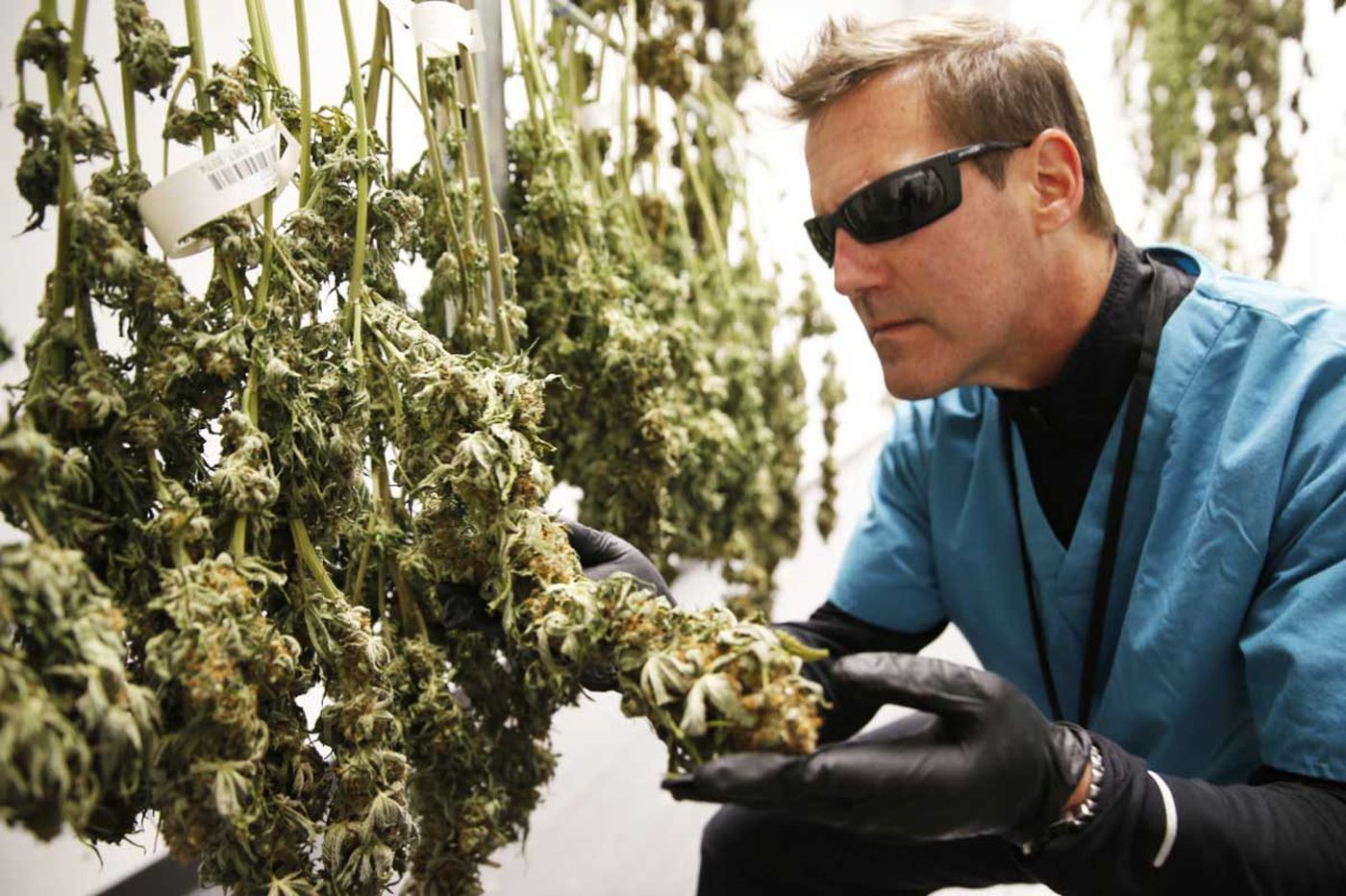 Philly area investment firm doubles down on marijuana