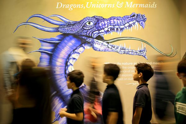 Unicorns, mermaids, and dragons: The stars of the Academy of Natural Sciences' latest exhibit