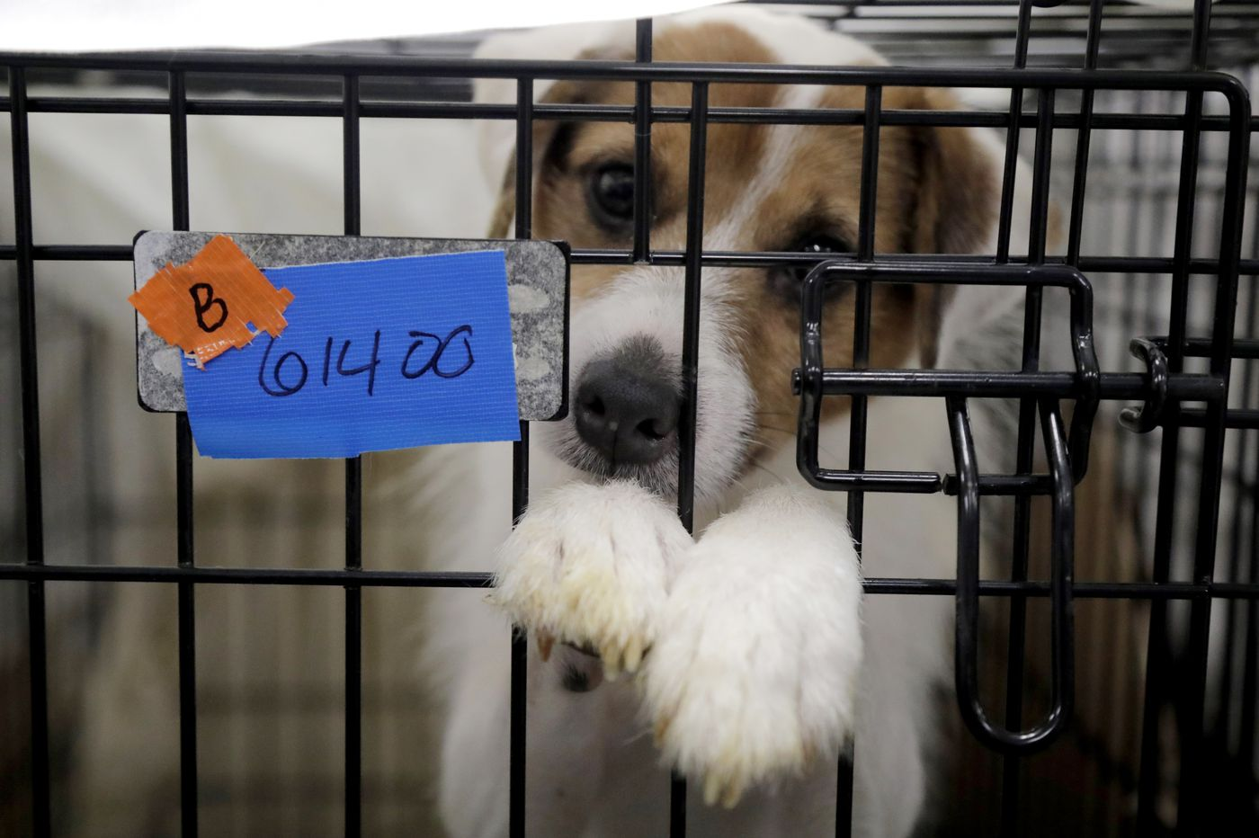 Some of nearly 200 dogs rescued from N.J. property almost ready for adoption