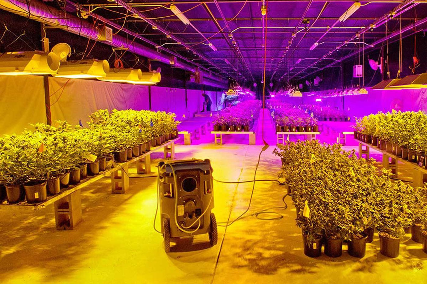 Acreage has big plans for marijuana in South Jersey and the nation